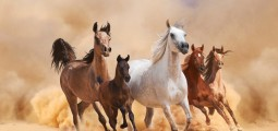 Are You Looking for Faster Horses or RESULTS?
